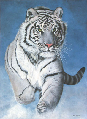 Tigresse33
