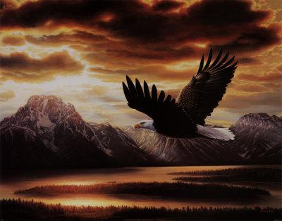aigle_noir56